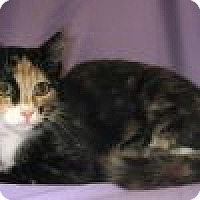 Adopt A Pet :: Clarissa - Powell, OH