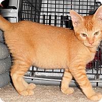 Adopt A Pet :: Keegan - Chattanooga, TN