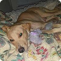 Adopt A Pet :: Abbey - Marlton, NJ