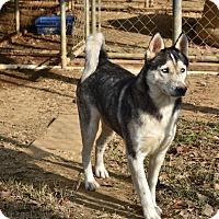 Adopt A Pet :: Macy - Charlemont, MA