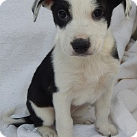 Adopt A Pet :: Bayrose (6 lb) - SUSSEX, NJ