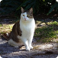 Adopt A Pet :: Hopkins - Bonita Springs, FL