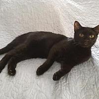 Adopt A Pet :: Audrey - Madison, NJ