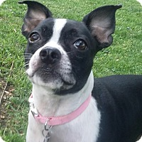 Adopt A Pet :: Ally - Jackson, TN