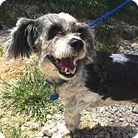 Adopt A Pet :: Gizmo 2 - Savannah, GA