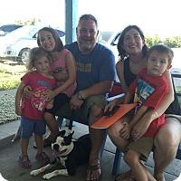 Adopt A Pet :: Spunky - Weatherford, TX