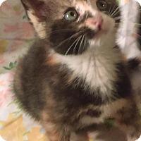 Adopt A Pet :: Esmerelder - Glen cove, NY