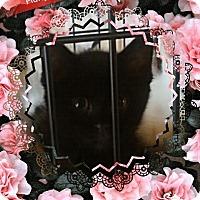 Adopt A Pet :: Furry - San Bernardino, CA
