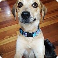 Adopt A Pet :: Sarah - Harrisville, WV