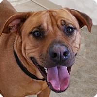 Adopt A Pet :: Joey - Urbana, OH