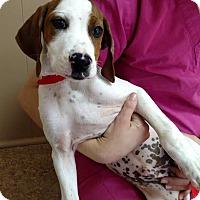 Adopt A Pet :: Nelson - Sherman, CT