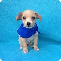 Adopt A Pet :: Odie - Burbank, CA