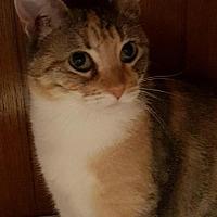 Adopt A Pet :: Celine - Spring, TX