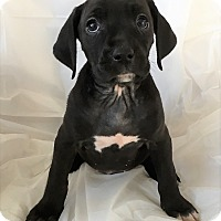Adopt A Pet :: Maggie - Mooresville, NC