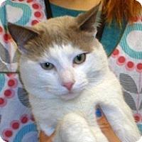 Adopt A Pet :: Nicoli - Wildomar, CA