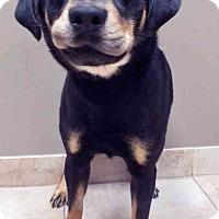 Adopt A Pet :: Rudy - Oswego, IL