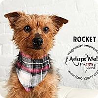 Adopt A Pet :: Rocket-pending adoption - Omaha, NE