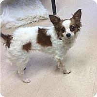 Adopt A Pet :: Spice - Saskatoon, SK