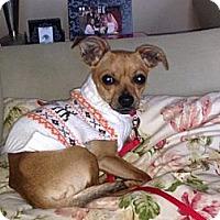 Adopt A Pet :: Taco - Midway, KY