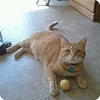 Adopt A Pet :: Carson - Grand Rapids, MI