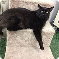 Adopt A Pet :: Rascal - Chandler, AZ