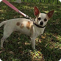 Adopt A Pet :: Radar - Houston, TX