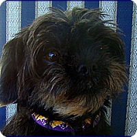 Adopt A Pet :: FRANCINE in Skokie, IL. - Lemont, IL