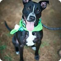 Adopt A Pet :: Freckles - Alpharetta, GA