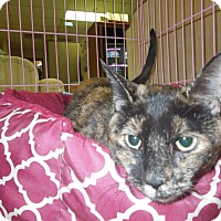 Adopt A Pet :: Misty - Medina, OH