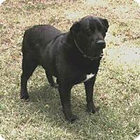 Adopt A Pet :: Starla-Courtesy Post - Alpharetta, GA