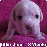 Adopt A Pet :: Jolene's Pup F6 - Billie Jean - Tampa, FL