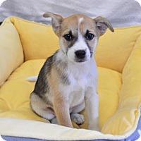 Adopt A Pet :: Xmen: Magento - Palo Alto, CA