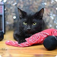 Adopt A Pet :: Joe Jett in CT - East Hartford, CT