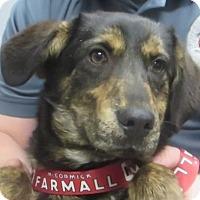 Adopt A Pet :: Jenna - Lincolnton, NC