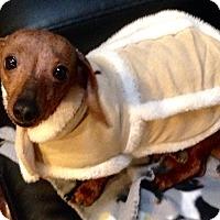 Adopt A Pet :: Suki - Windermere, FL