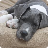 Adopt A Pet :: Forrest - Raleigh, NC