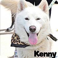 Adopt A Pet :: Kenny-Foster Needed! - Carrollton, TX