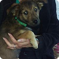 Adopt A Pet :: Delilah - Charlestown, RI