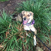Adopt A Pet :: Merlin - Ardmore, OK