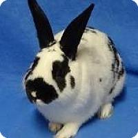 Adopt A Pet :: Ollie - Woburn, MA