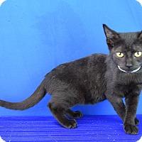 Adopt A Pet :: Salem - Carencro, LA