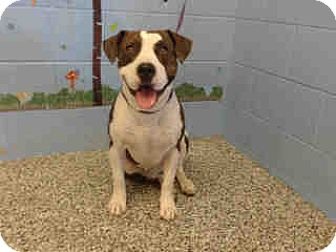 Pit Bull Terrier Mix Dog for adoption in San Bernardino, California - URGENT ON 10/12 San Bernardino