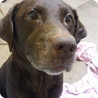 Adopt A Pet :: Cody #4 - Buckeystown, MD