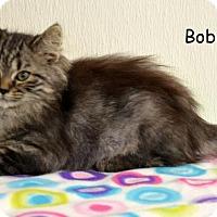 Adopt A Pet :: Bobbi - DuQuoin, IL