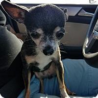 Adopt A Pet :: Cosita - Houston, TX