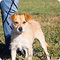Adopt A Pet :: Watson - Vacaville, CA