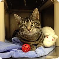 Adopt A Pet :: H-8 - Triadelphia, WV