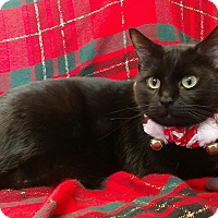 Adopt A Pet :: Raz - Waldorf, MD
