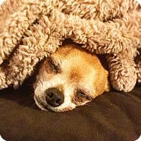 Adopt A Pet :: Leo - Verona, NJ