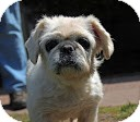Pekingese Mix Dog for adoption in Tinton Falls, New Jersey - Princess
